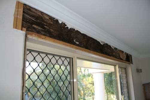 Termite damage disclosure