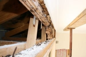 Disclosing of termite damage, benefits