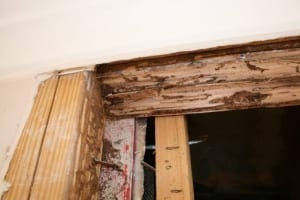 Benefits of disclosing termite evidence