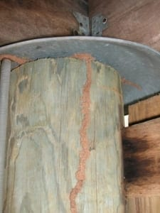 Fallacies of treated timber & termites