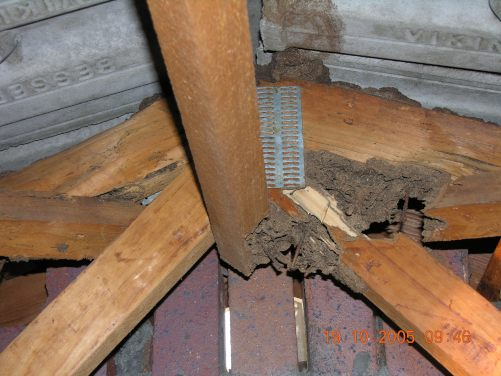 Roof termite damage