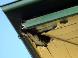 Pre-sale building inspection advantages