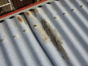 Rusted roofs Brisbane