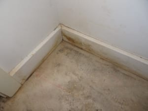 Rising-damp & seepage to apartment unit